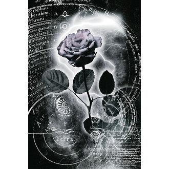 Poster Mercury Rose, Reinders